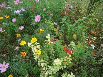 Garden081103a