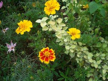Garden081103b