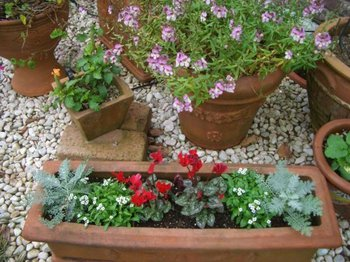 Garden081103c