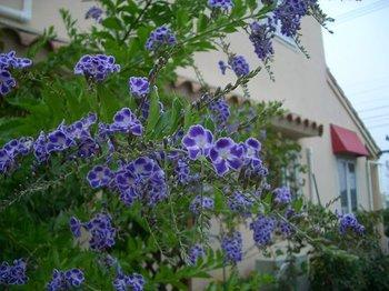 Garden081103d