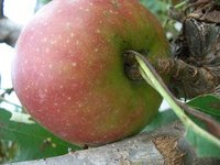 apple051002
