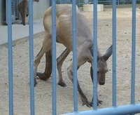 kangaroo0408