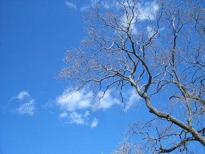 tree060117a